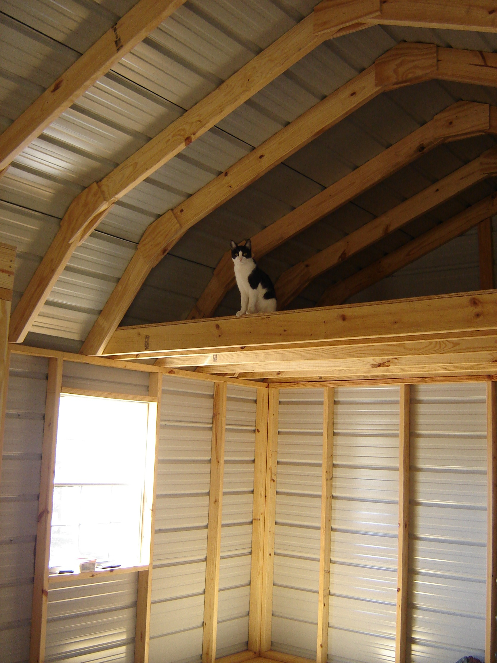 Moonshadow inspecting the loft